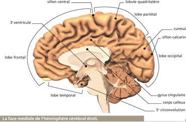 parietal lobe function tests pdf