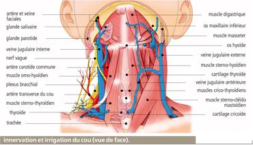 La hernie de lépine dorsale les meilleur le traitement