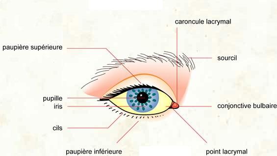 La plastique des rides mimiques autour des yeux